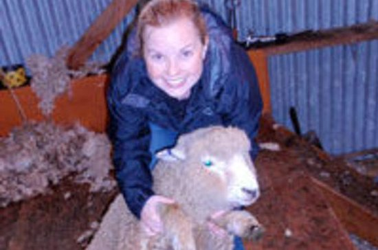Visita a una granja de ovejas en...