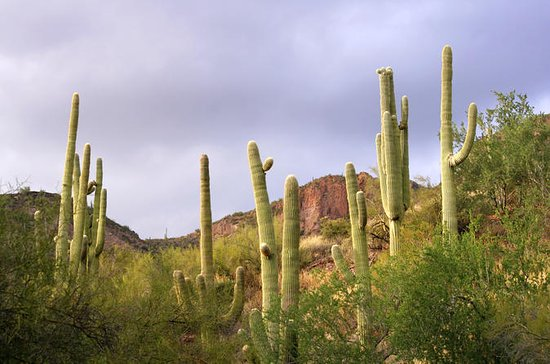 Phoenix and Scottsdale 5.5-Hour Small-Group Tour with Guide