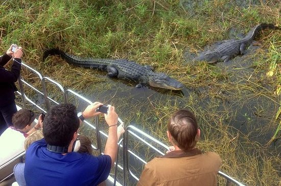 Florida Everglades Airboat Tour and...