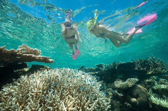 Great barrier reef diving and snorkeling cruise from cairns provided by down under cruise dive - Best place to dive the great barrier reef ...