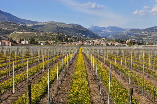 Valpolicella Day Trip from Venice...
