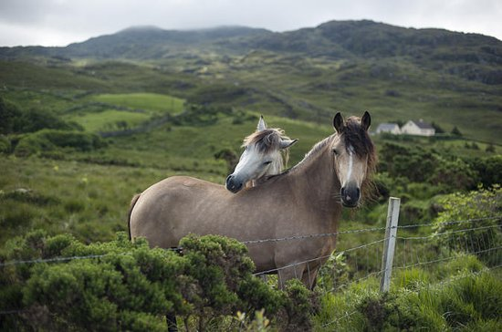 2-Day Connemara and Galway Bay Tour