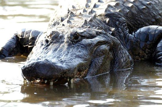 Gatorland Nights Shining Tour