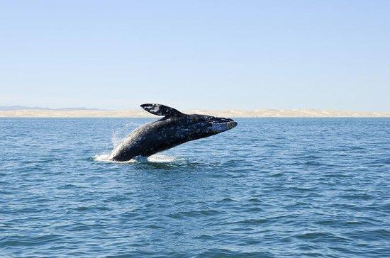 Djuphavsfiske eller Whale-Watching ...
