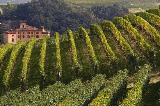 Private Tour: Piemont-Weinprobe in ...