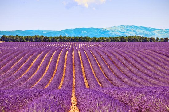 Small-Group Lavender Day Trip from...