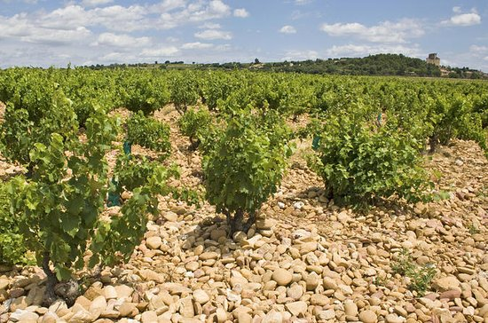 Private Rhone Valley Wine Tour from...