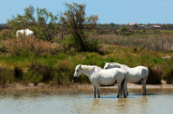 Private Provence Tour: La Camargue...