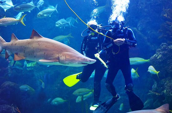 Dive with the Sharks at The Florida...
