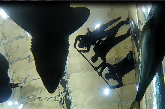 Shark Swim at the Florida Aquarium 30-Minute Experience