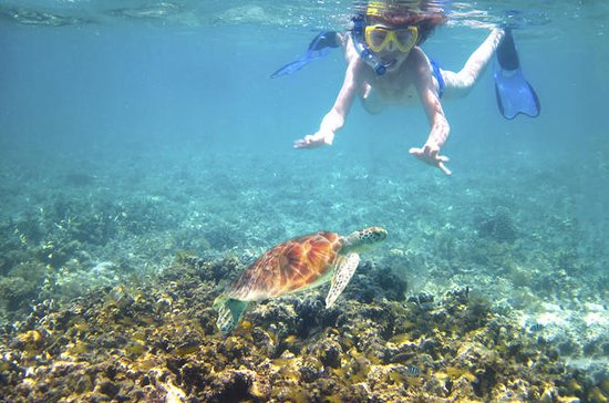 Maui Turtle Reef Kayak Tour, with ...