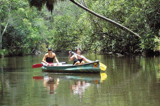Noosa Everglades Canoe Trip with...