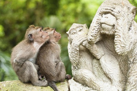 Bali Monkey Forest, Mengwi Temple and ...