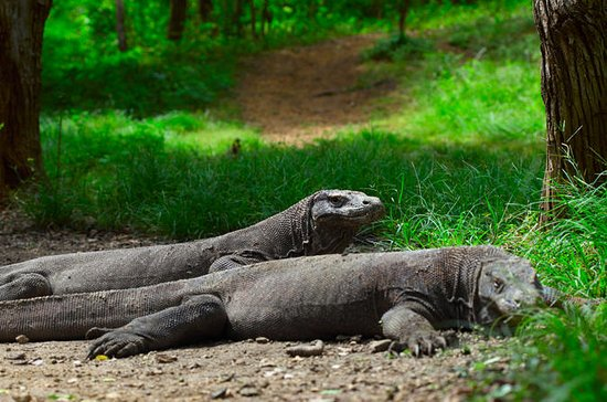 3-Day Komodo National Park Tour ...