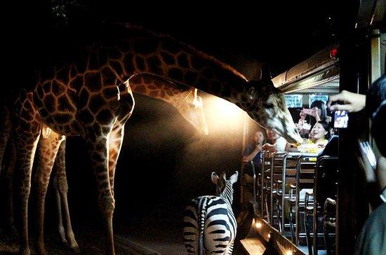 3-Hour Chiang Mai Night Safari