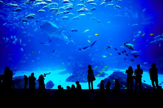 Sentosa S.E.A. Aquarium™ Admission in ...