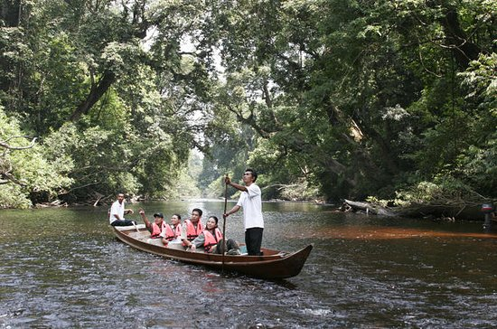 3-Day Taman Negara Adventure from...