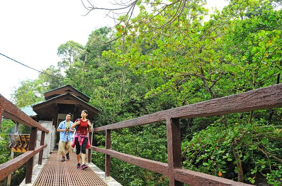 Penang National Park Half-Day Trek