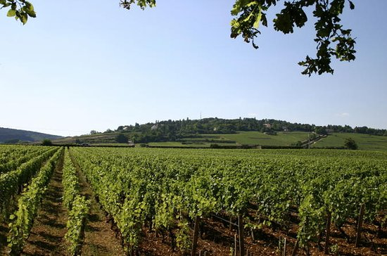 Burgundy Private Full-Day...