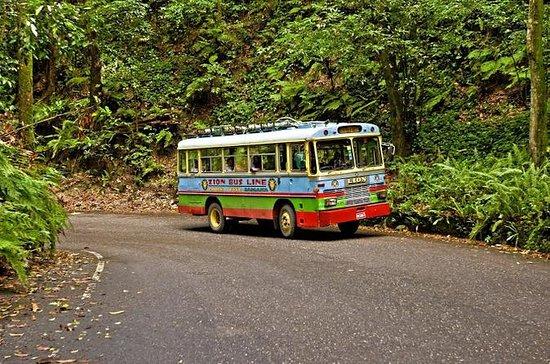 Recorrido en autobús Zion en Ocho Ríos