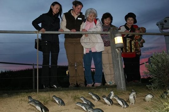 Phillip Island Penguin Parade Tour from...