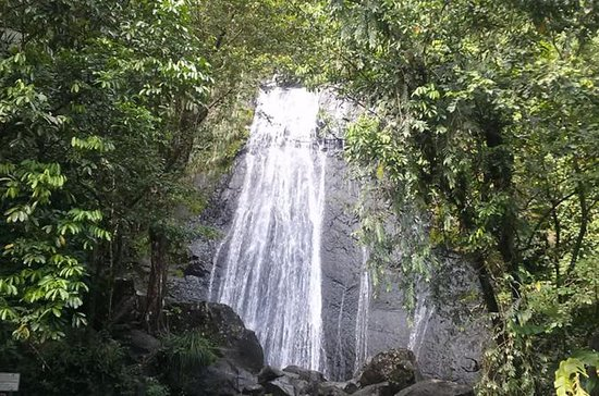 El Yunque Rainforest Half-Day Trip...