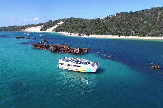 Cruzeiro com golfinhos no Moreton Bay...