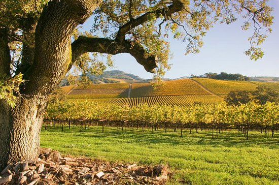 Napa and Sonoma Wine Country...
