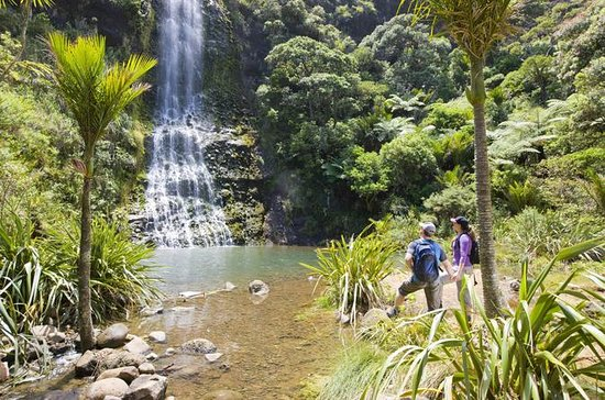 Waitakere Ranges Guided Walk from...