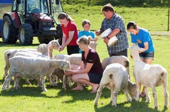 Agrodome Sheep Show and Farm Tour