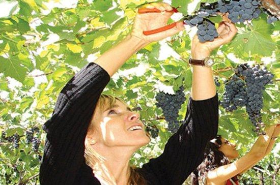 Tour di degustazione di vini di mezza