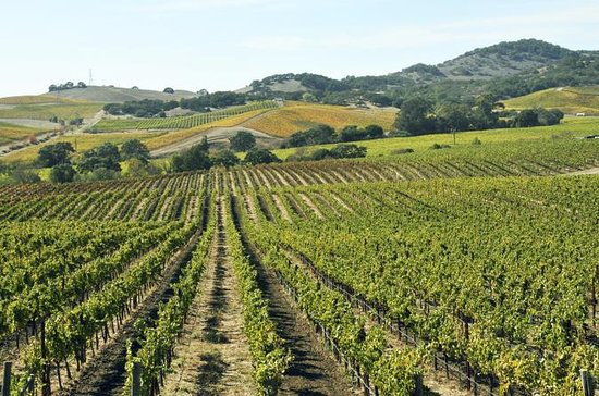 Casablanca Valley Private Wine Tour...