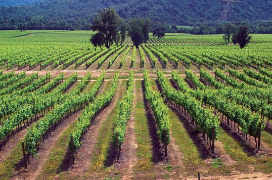 Maipo Valley Wine Tour: Santa Rita ...