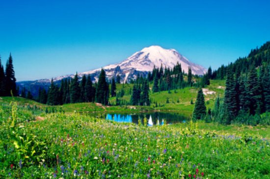Mt. Rainier Day Tour fra Seattle