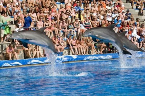 Skip the Line: Mallorca Marineland ...