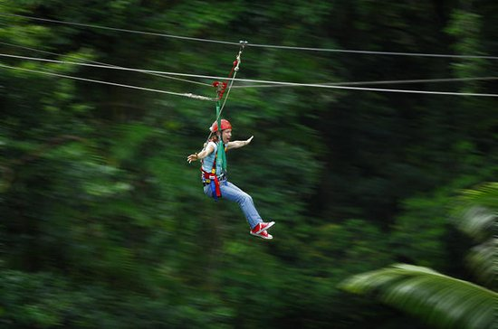 Daintree Rainforest Zipline og...