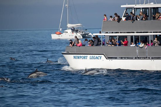 Whale Watching Cruise From Newport