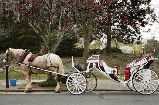 Private Horse and Carriage Ride in...