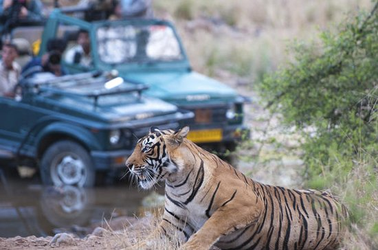 2-Night Private Ranthambore National...