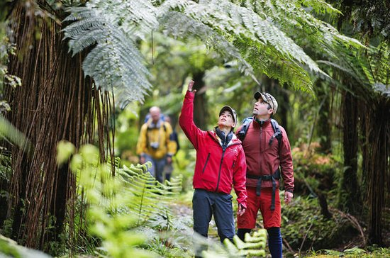 3-Day Hollyford Track Guided Walk...