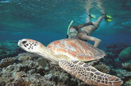 Great Barrier Reef Seiling og...