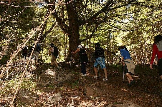Cerro Colorado Trekking Tour fra San...