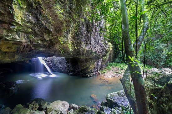 Springbrook And Tamborine Rainforest Tour Including Natural Bridge Glow Worm Cave Provided By Queensland Day Tours