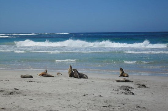 Kangaroo Island in a Day Tour from Adelaide
