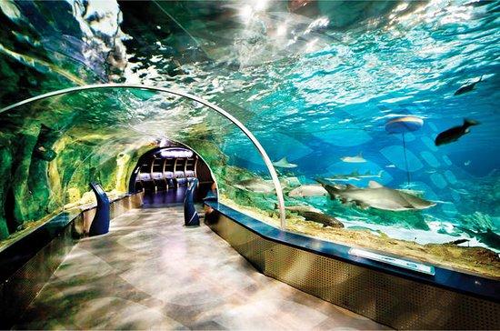 Visite de l'aquarium d'Istanbul et...