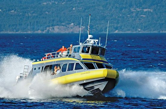 Whale-Watching Cruise from Vancouver ...
