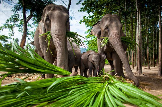 Chiang Mai Tour: Zipline, Rafting, Long-Neck Hill Tribe
