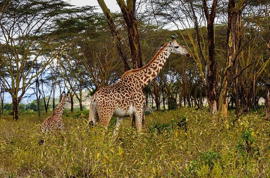 Nairobi to Hell's Gate National Park...
