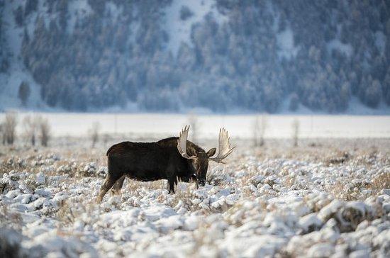 Grand Teton and National Elk Refuge...