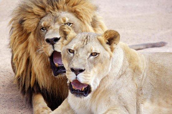 Lion Habitat Ranch: General Admission...